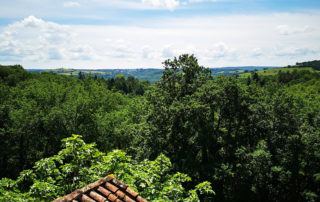 Rose room view over the forest